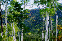 Fall Begins in Great Basin National Park