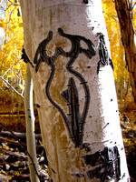 Basque Tree Carving in Monitor Range Nevada